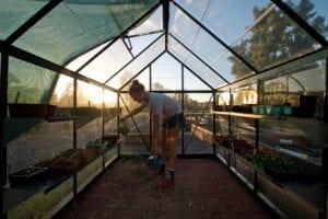 "Senior Brianna Doyle waters greenhouse inhabitants in Arroyo Vista's ""Ants in Your Plants"" community garden. Steve Zylius / UCI"
