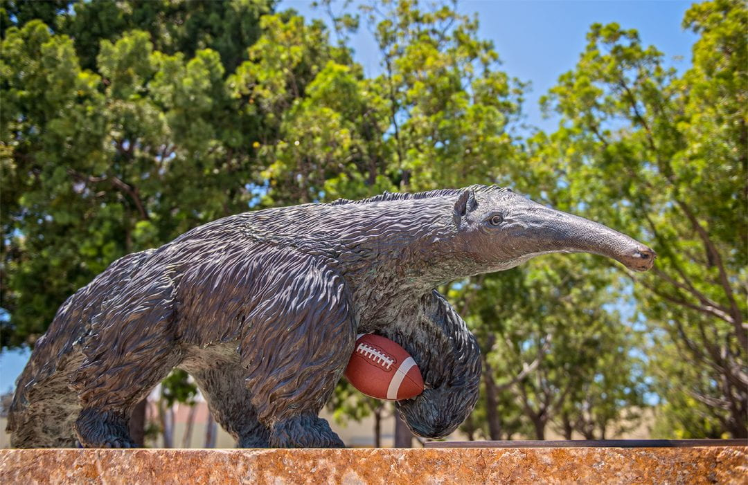 The Los Angeles Rams' summer training camp will be held at UCI, home of the Anteaters – but no football team of its own. Campus gridiron fans joke that the school has been undefeated in football for 50 years.  Steve Chang / UCI