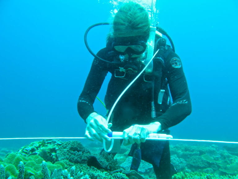 Researchers explain spike in ocean temps that caused mass coral death in South China Sea