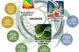 ARPA-E funds UCI-led study of kelp farming