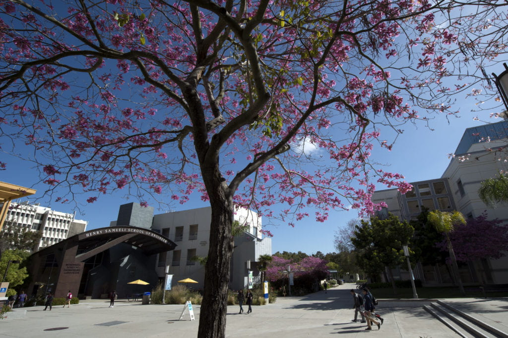 Pink tree and UCI engineering building