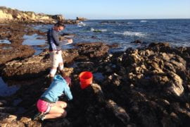 Marine vegetation can mitigate ocean acidification, UCI study finds