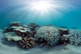 Bleaching of coral reefs reduced where daily temperature changes are large