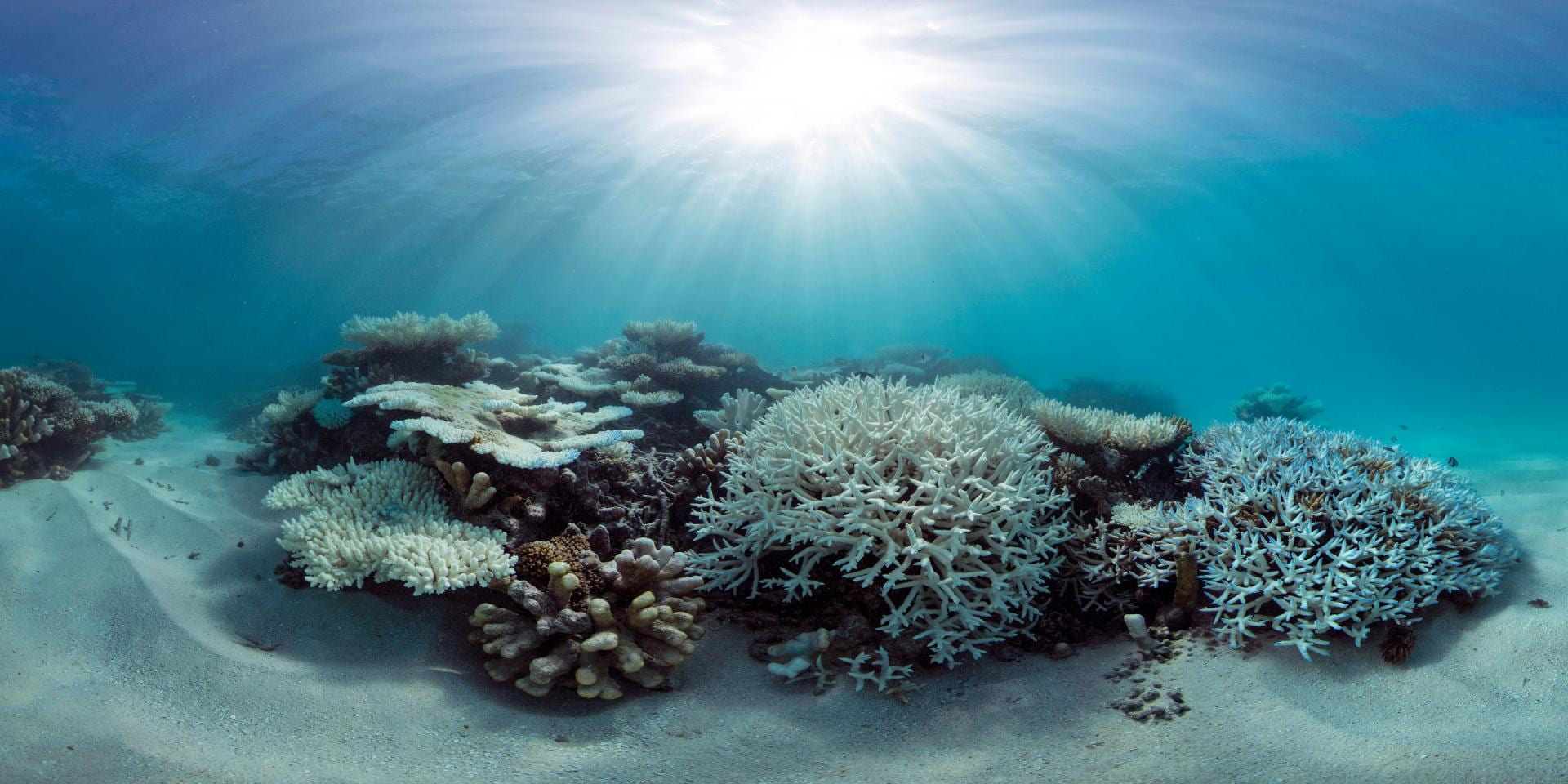 Bleaching of coral reefs reduced where daily temperature ...