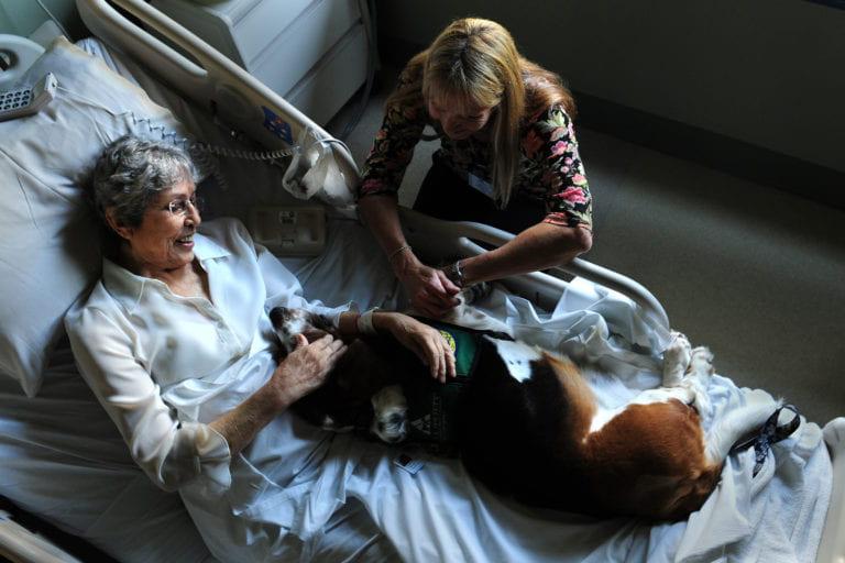 Healing paws