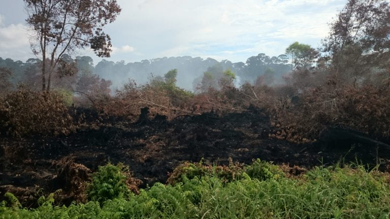 UCI and Singapore researchers find source of 2015 Southeast Asia smoke cloud