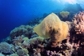 UCI ecologist co-authors UN Environment report on impact of plastics on coral reefs