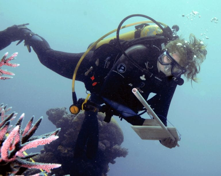 Study examines a million corals one by one in urgent call to save reefs