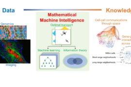 UCI mathematicians use machine intelligence to map gene interactions
