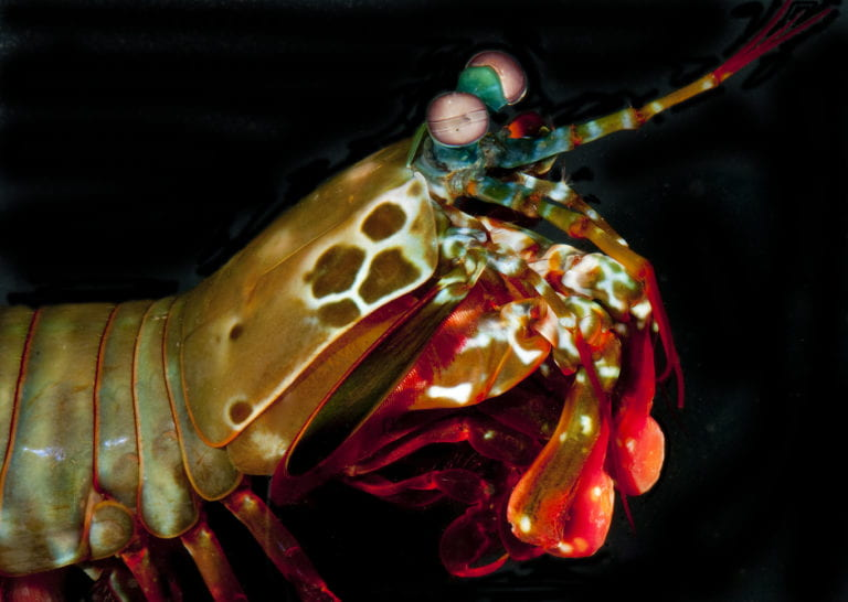 UCI materials scientists study a sea creature that packs a powerful punch
