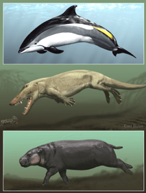 How did hippo, whale and dolphin skin adapt to live in water? UCI study reveals evolutionary clues