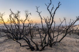 Greenhouse gas and aerosol emissions are lengthening and intensifying droughts
