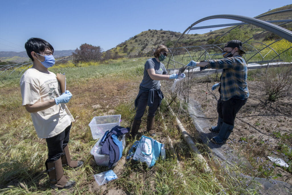 Postdoc Bri Finley (black cap), grad student Andie Nugent, and 4th year undergrad Brian Chung gather samples from UCI's facility at the Irvine Ranch Conservancy at Loma Ridge for testing.