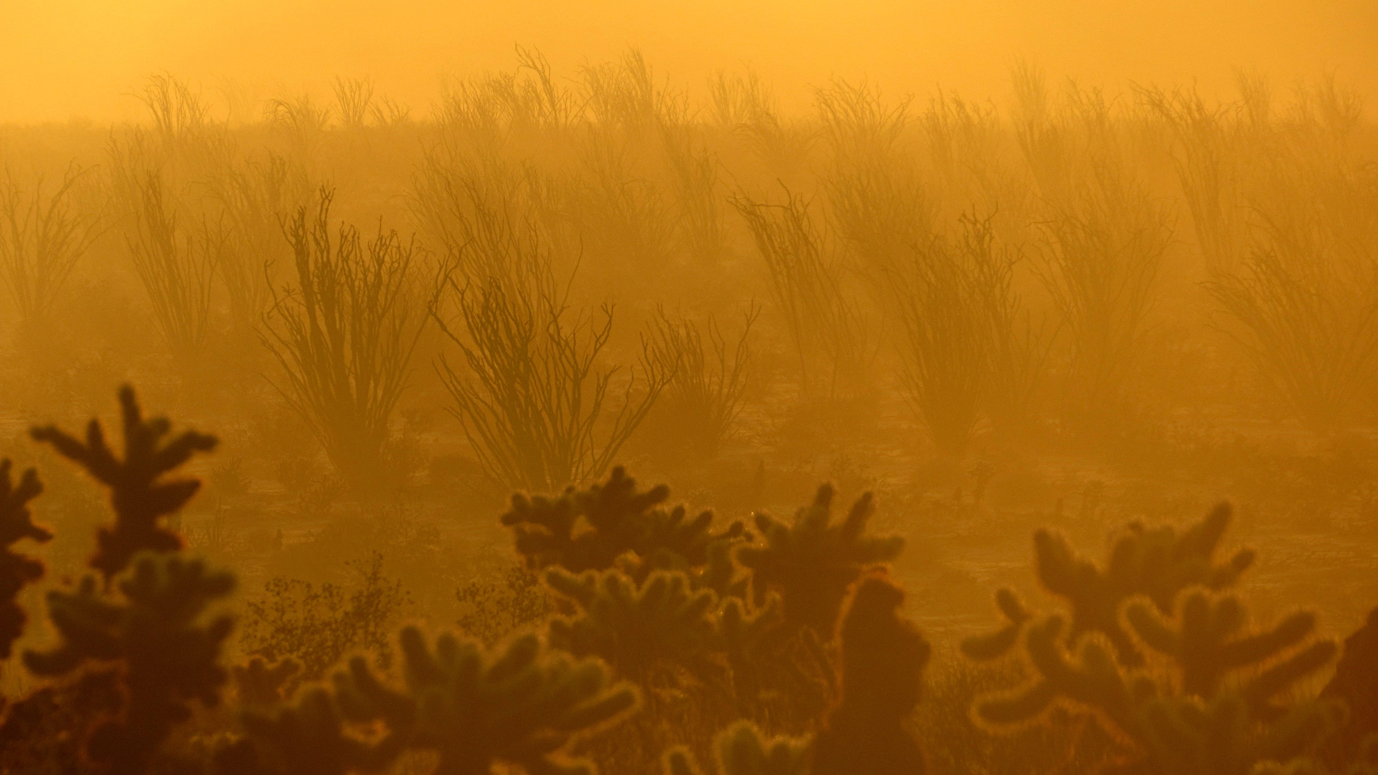Newswise: Climate Change Is Driving Plant Die-Offs In Southern California, UCI Study Finds