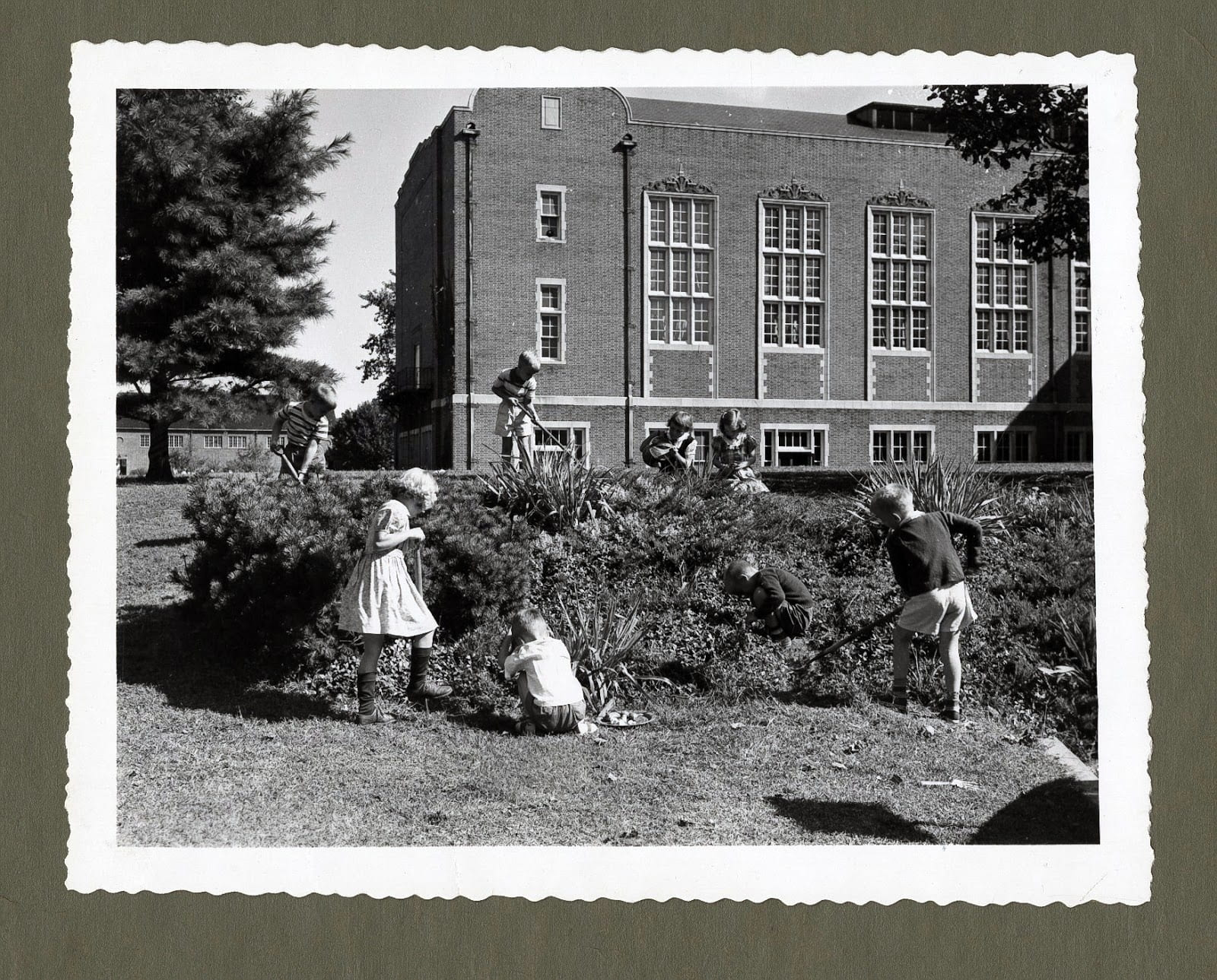 Students working in the garden on the southwest side of Stephens Hall, circa 1940s