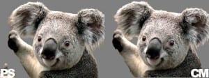 Cutout comparison of a Koala bear