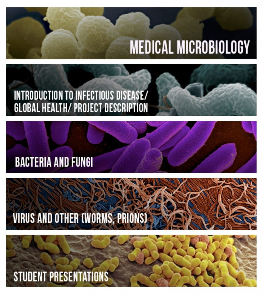 Microbiology Banners