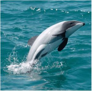 Pj Dolphin 15
