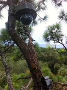 cam-in-tree1