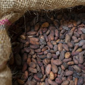 close-up of a burlap bag holding cacao beans