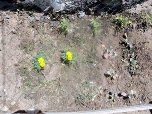 Demonstration garden following the companion planting technique