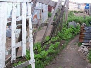 Household Garden