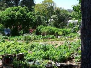the soil for life garden