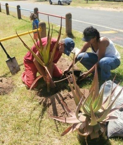 planting day scene pic