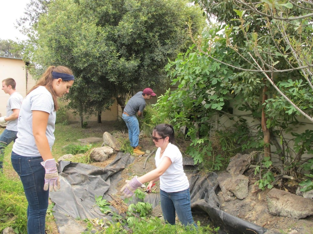 The group removing the debris and overgrown plants from the ripped tarp basin of the fountain