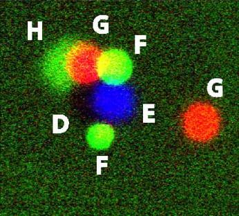 PNAS_109_18731_2012_Polygamous_Particle