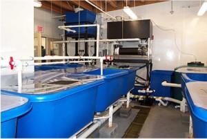 DMC incubator lab2