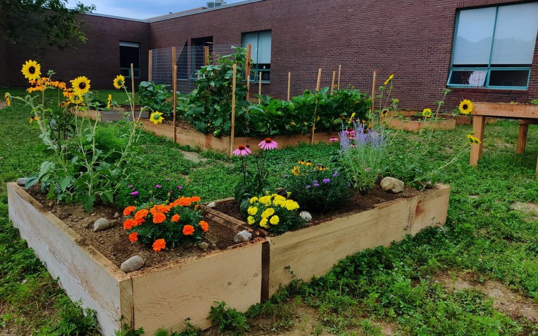 Campus Community Garden Proves to be Immense Success