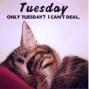 47495-Only-Tuesday