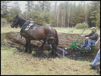CSF plow equip