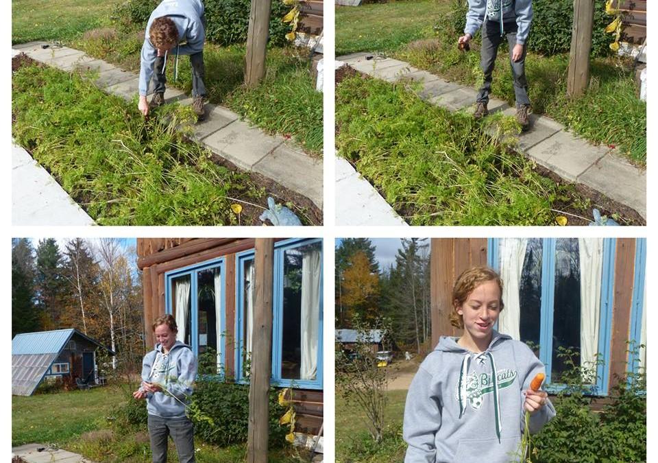 Forest Gardening &Herbalism Internship by Victoria LoRe