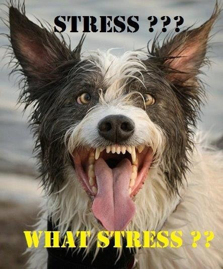 6 Steps for Eliminating Test Anxiety