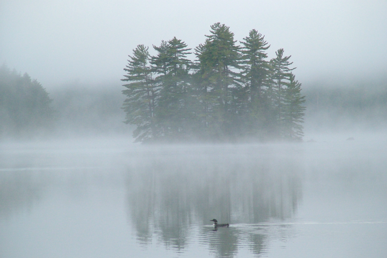 """Loon on Arbutus Pond"" by Mark Twery, winner of the People's Choice Award. Courtesy of Mark Twery."