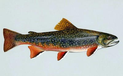 Professor, graduate coauthor publication on DNA-based detection of brook trout in streams