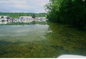A body of water clogged with hydrilla.