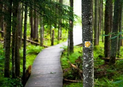 Boreal Life Trail