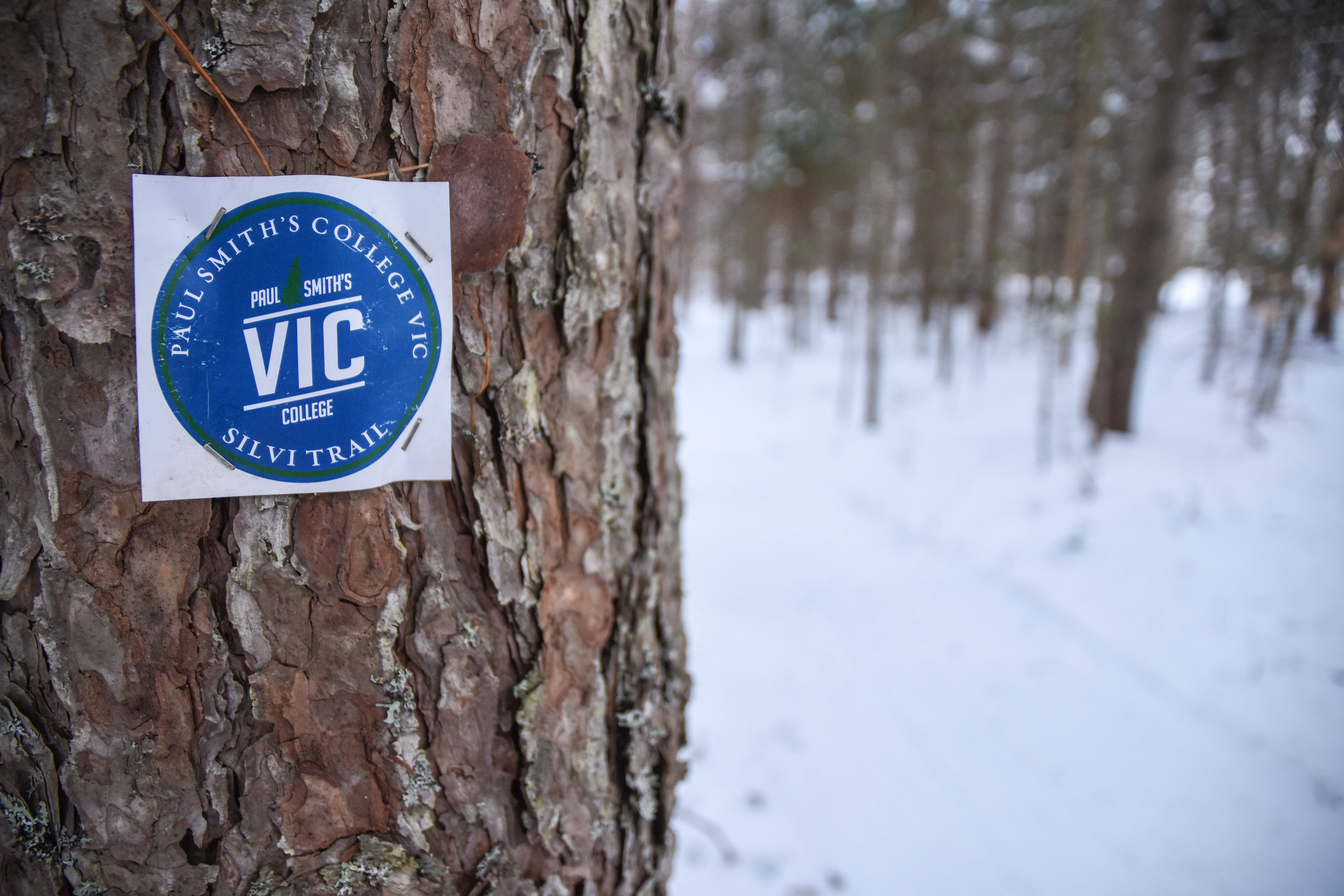VIC trail marker in winter