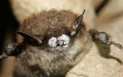 The Adirondack Naturalist: Moths & Bats