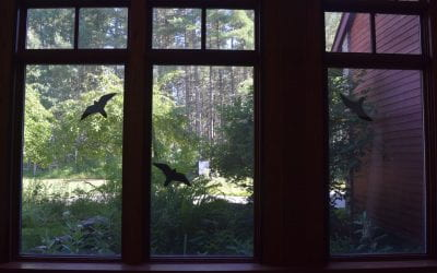 A Bird at the Window