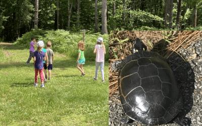 Junior Herons Club: Turtle Week