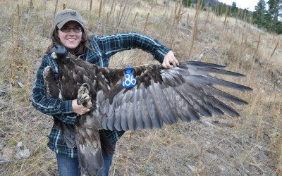 Just Wingin' It – Sarah Norton's Work with Raptors