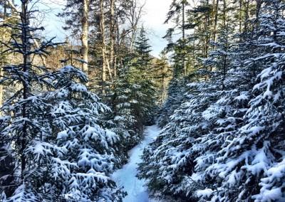 Lake Arnold Trail