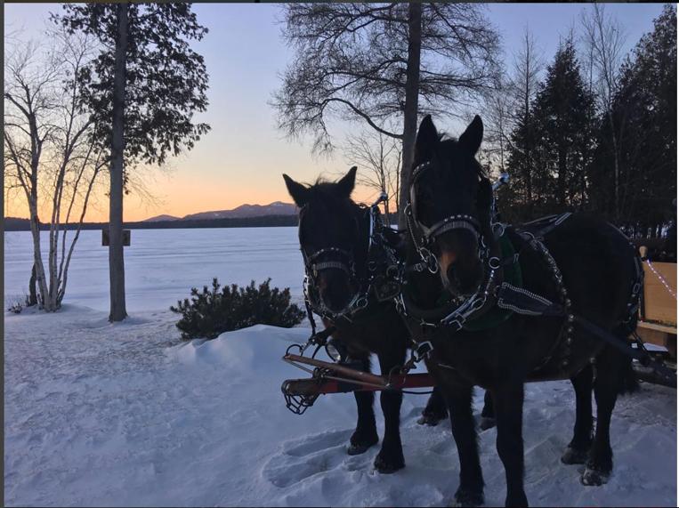 Draft Horses Building an Adirondack Legacy