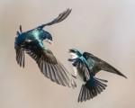 sfw_jerryamende_276301_warbirds-copy