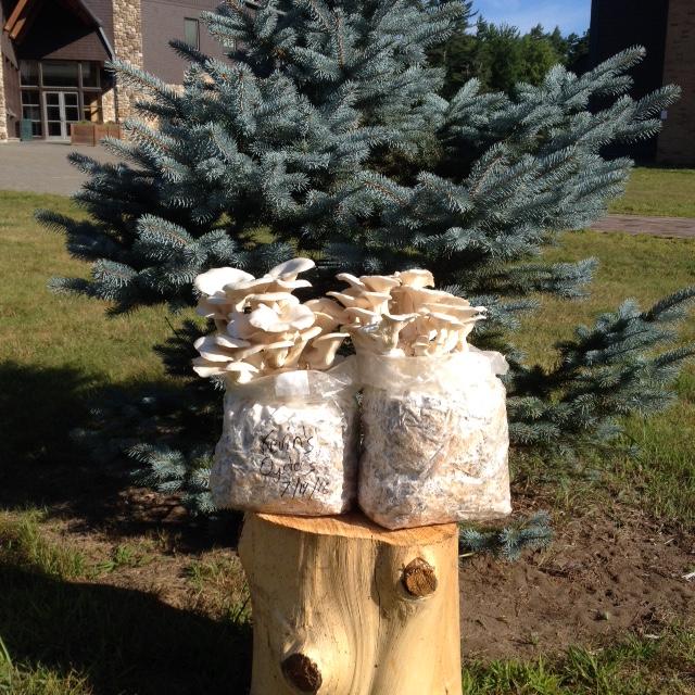 Adirondack Mycology Club: Successful Shroomin'