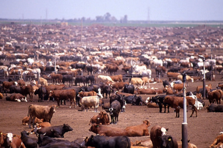 Environmental Impact of Animal Agriculture